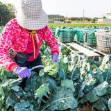 日本と台湾で「有機食品の同等性」を相互承認 有機農産物の輸出入が可能に